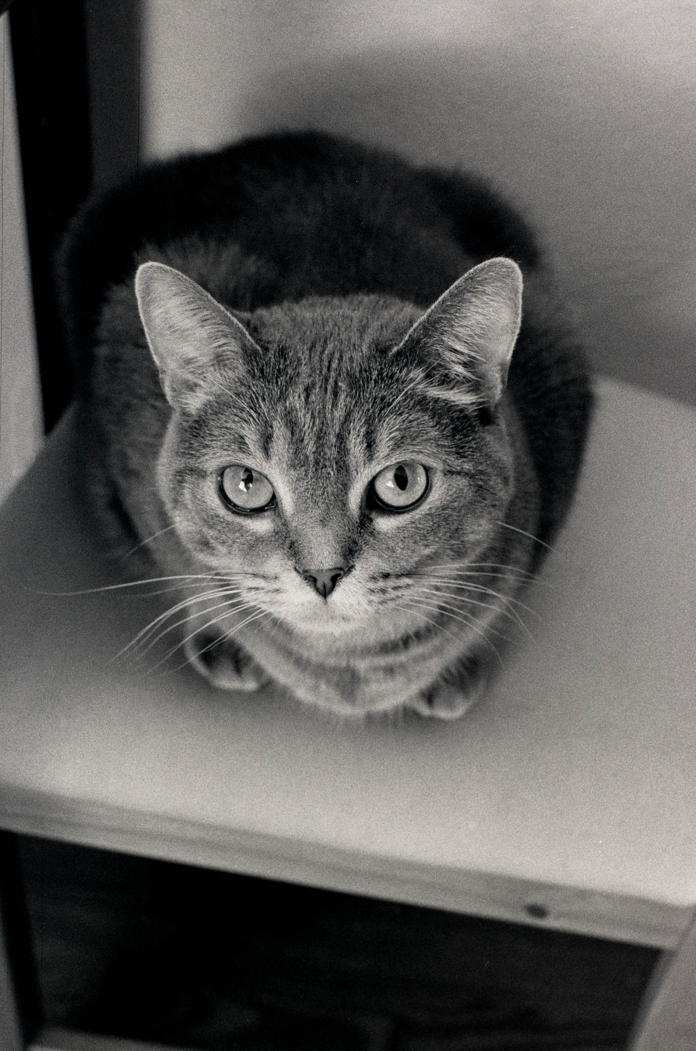 Photo from a roll of Ilford HP5 shot with my Nikon N2020